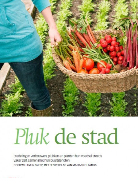 Pluk de stad -  The Optimist